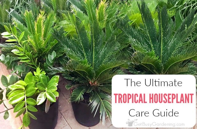 Tropical Houseplant Care Guide: How To Grow Tropical Plants