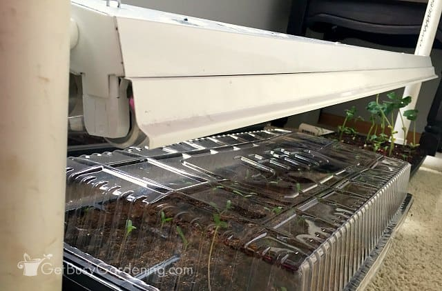 Using indoor fluorescent grow lights for seedlings