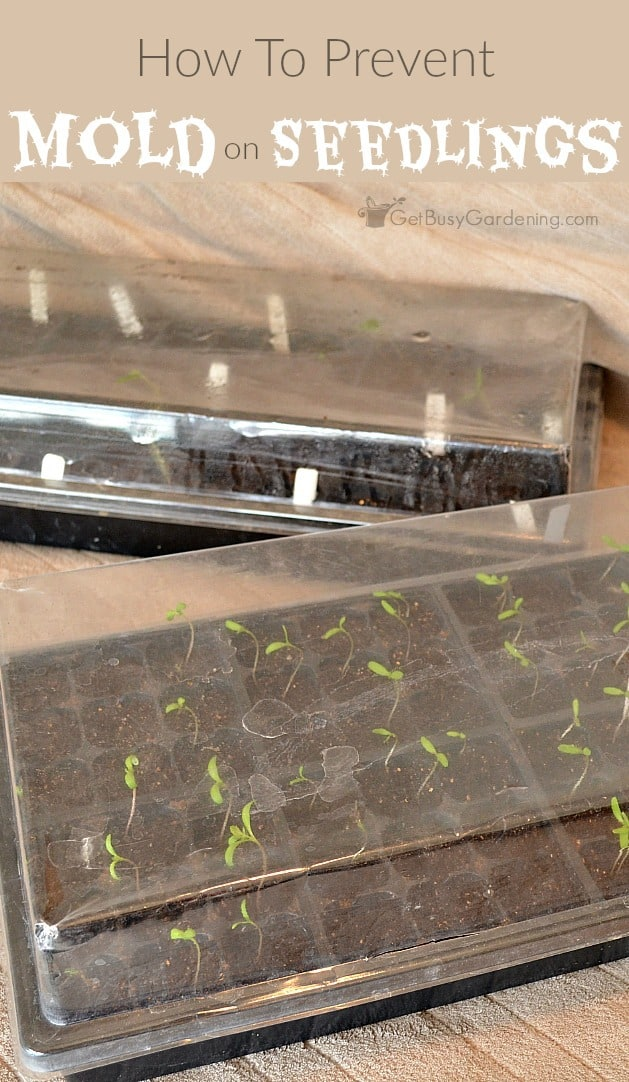 Finding mold growing in your seed trays is super frustrating and scary. Here's how to get rid of mold on seedlings, and stop it from growing back.