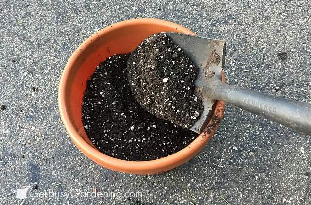 Filling pots with container gardening soil