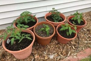 How to make your own potting soil for container gardening - Soil for container vegetable gardening ...