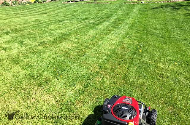 Mowing the lawn using patterns