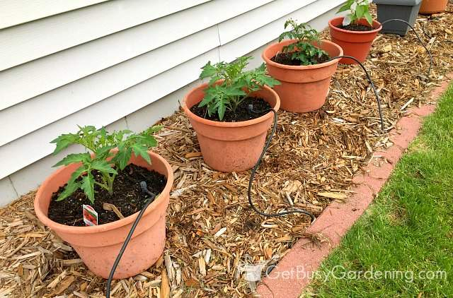 Plants thriving in soil for container gardening