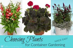 Choosing Plants For Container Gardening (Made Easy!)