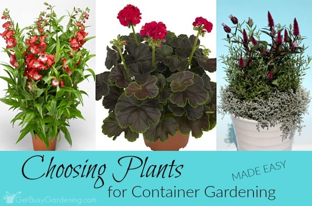 Container flower gardening: Choose Plants For Container Gardening (Made Easy!)