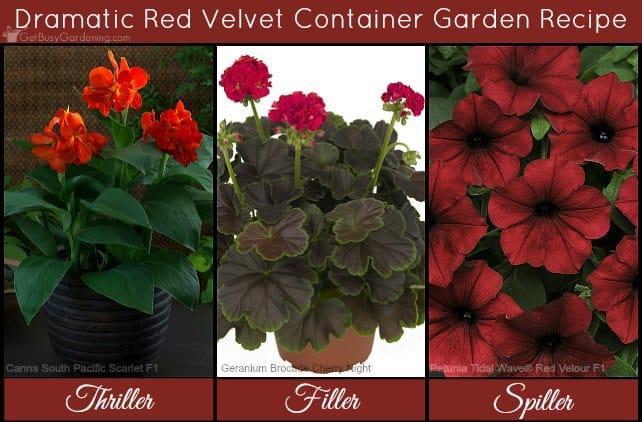 Dramatic red velvet container flower garden recipe