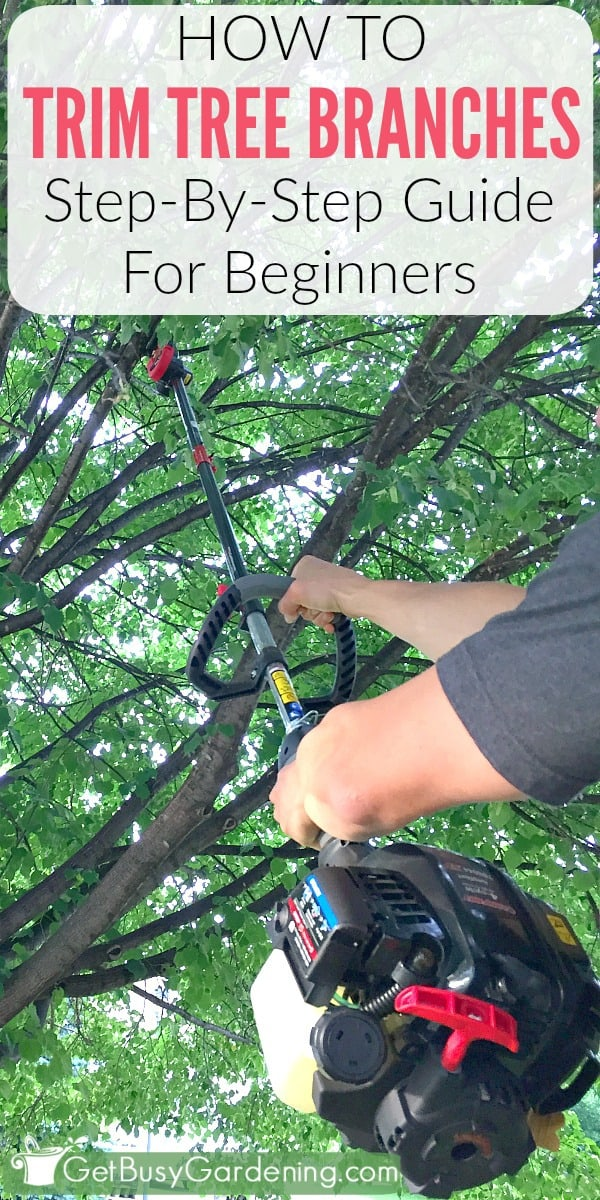 This step-by-step guide will show you exactly how to trim tree branches yourself, and give you tons of tips and advice for proper tree pruning techniques. (AD)