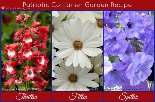 Patriotic container flower garden recipe