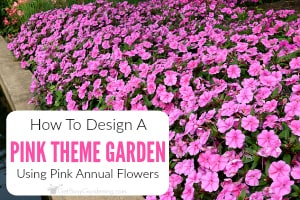 How To Create A Pink Garden Theme Design Using Annual Flowers