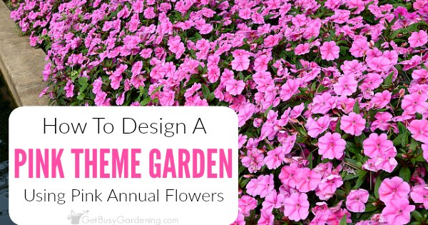 how to create a pink garden theme design using pink annual flowers, Beautiful flower