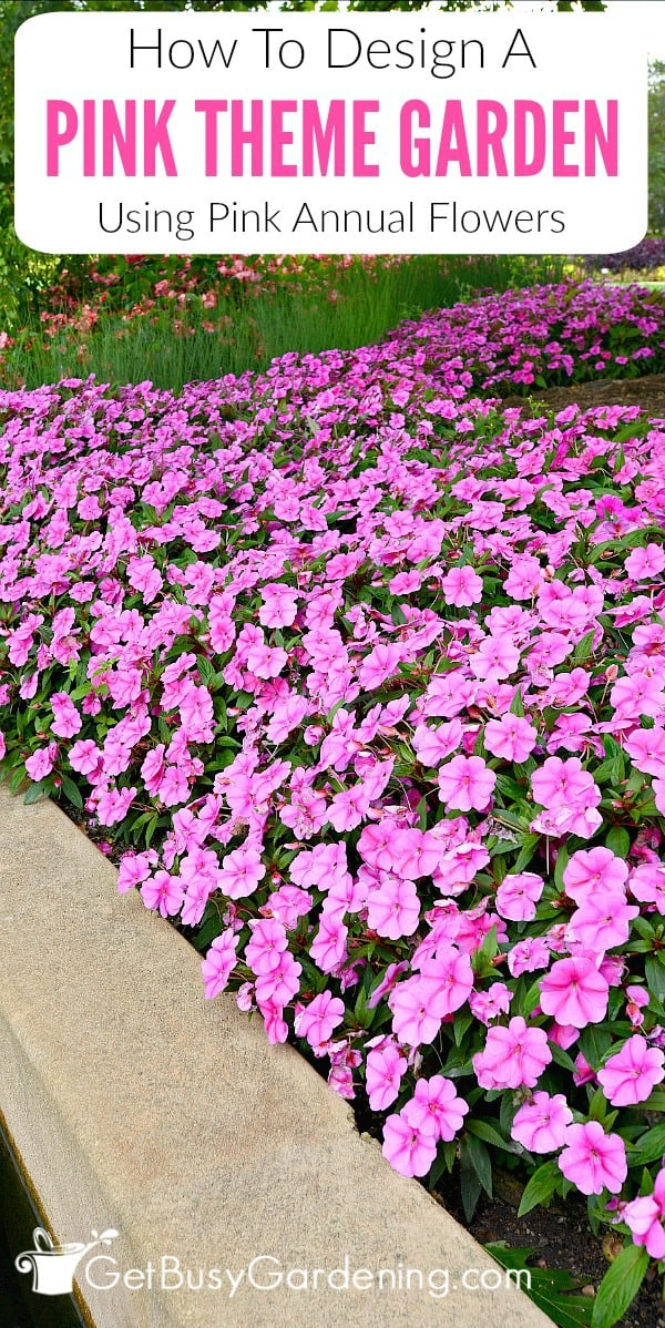 Designing a garden theme based on color is a fun way for beginners to experiment. Here's how to create a pink flower theme garden using pink annual flowers. (AD)