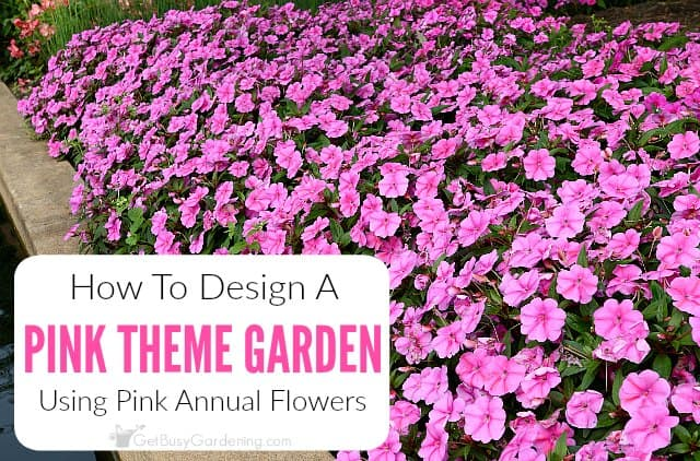 How To Create A Pink Garden Theme Design Using Pink Annual Flowers