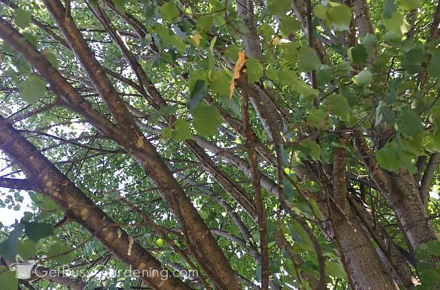 Removing tree branches that are dead or damaged