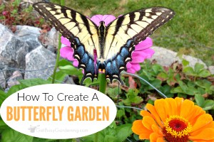 Flower Garden With Butterflies: Tips To Create A Butterfly Friendly Garden