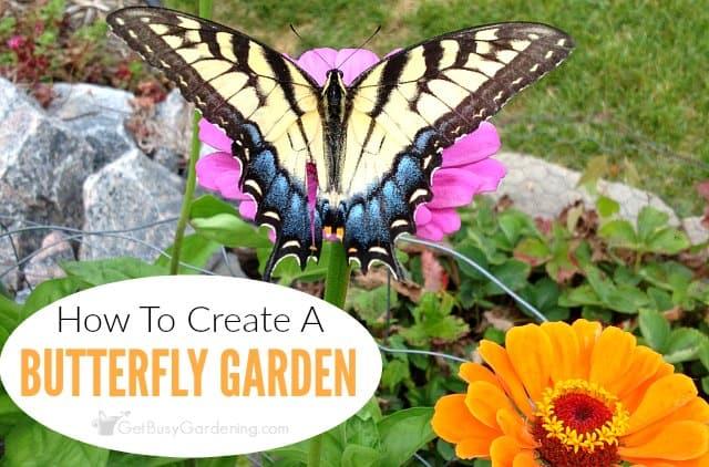 Superbe Flower Garden With Butterflies: Tips To Create A Butterfly Friendly Garden