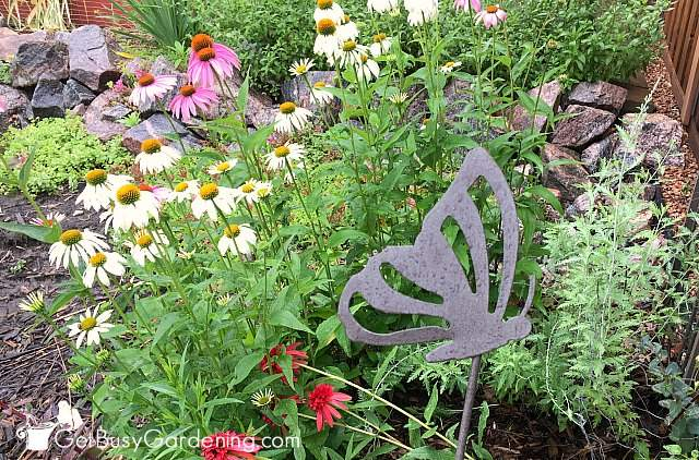My butterfly friendly garden