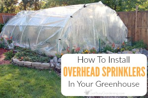 Easy DIY Overhead Sprinkler System For Greenhouse Irrigation