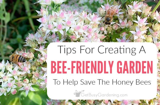 Create A Bee-Friendly Garden To Help Save The Honey Bees