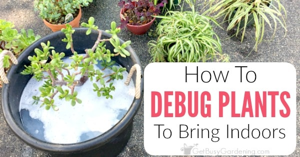 How To Debug Plants Before Bringing Them Indoors