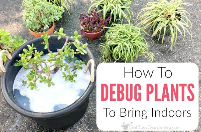 How To Debug Plants Before Bringing Them Indoors Get Busy Gardening