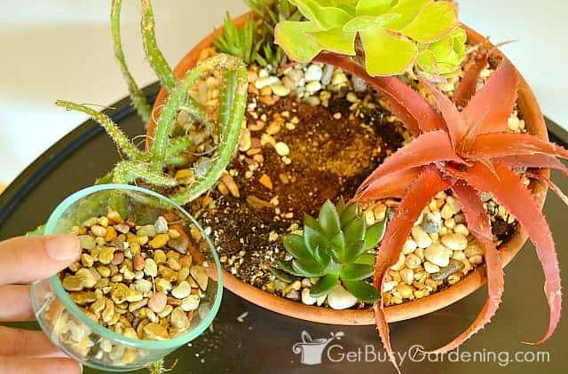 Add decorative rock to your succulent dish garden