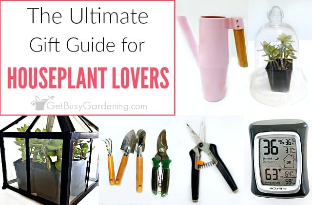 Indoor Gardening Gift Ideas: The Ultimate Houseplant Lover Gift Guide