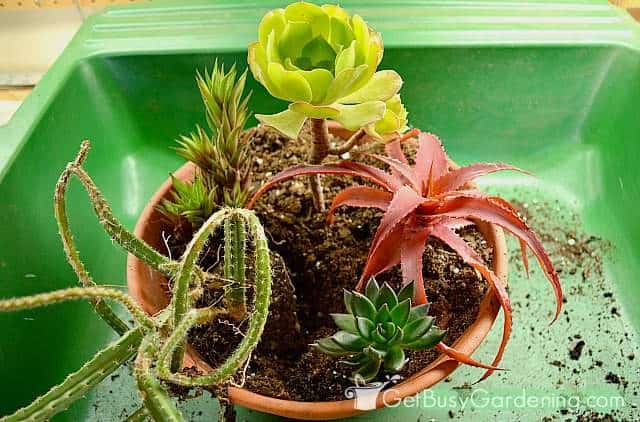Last add the cascading succulent plants