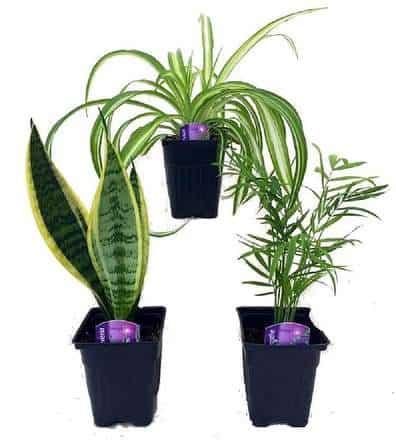 Easy low maintenance houseplants