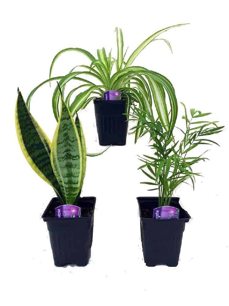 Indoor gardening gift ideas the ultimate houseplant lover for Indoor plant gift ideas