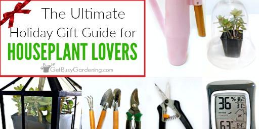 Holiday indoor gardening gift ideas get busy gardening for Indoor garden design twitter