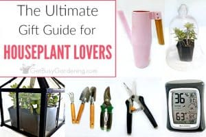 15+ Indoor Gardening Gift Ideas For Plant Lovers