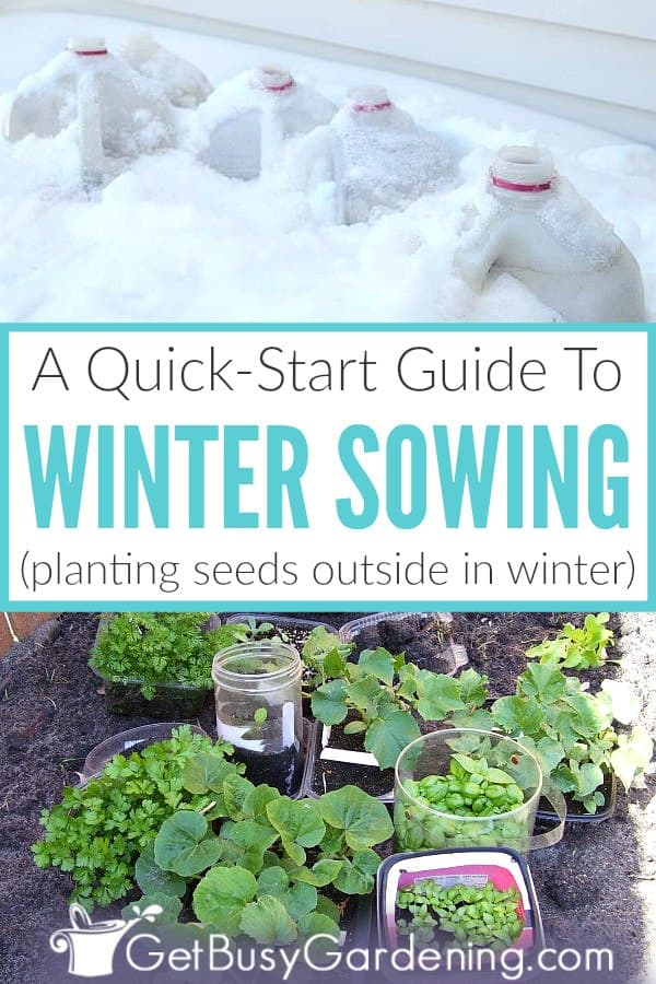 A Quick-Start Guide To Winter Sowing (plant seeds outside in winter)