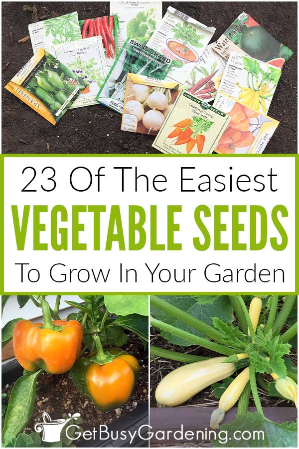 23 Of The Easiest Vegetable Seeds To Grow In Your Garden
