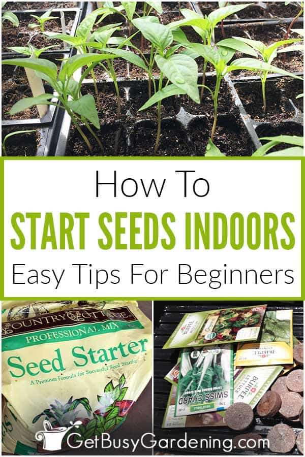 How To Start Seeds Indoors: Easy Tips For Beginners