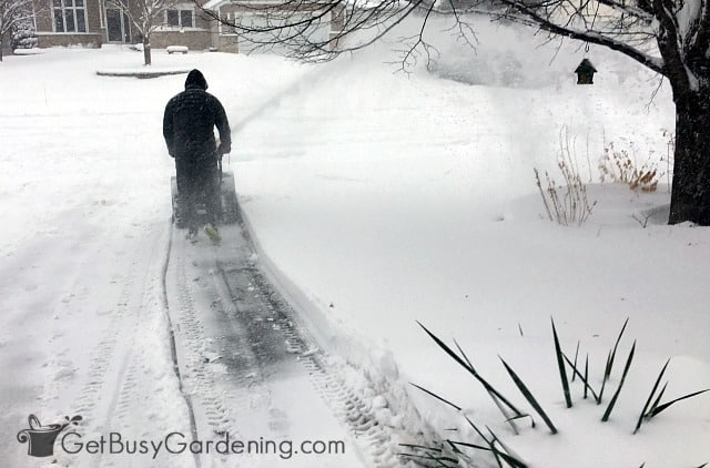 Aim your snow blower to protect plants from snow damage
