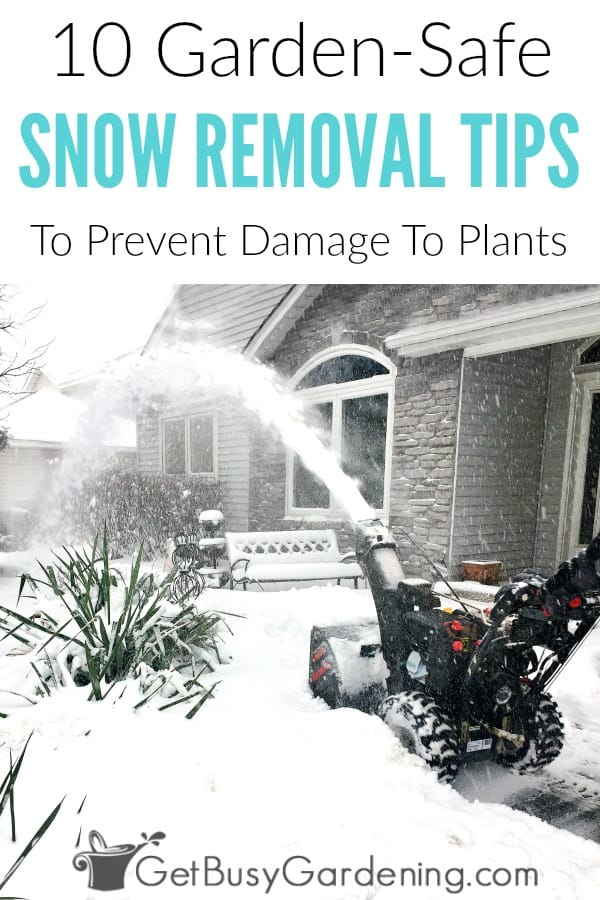 Snow is usually good for your gardens, but road salt accumulation in soil can cause salt toxicity in plants - which can kill sensitive plants. Learn how to protect plants from snow damage, and prevent road salt damage with these easy garden-safe snow removal tips. (AD)