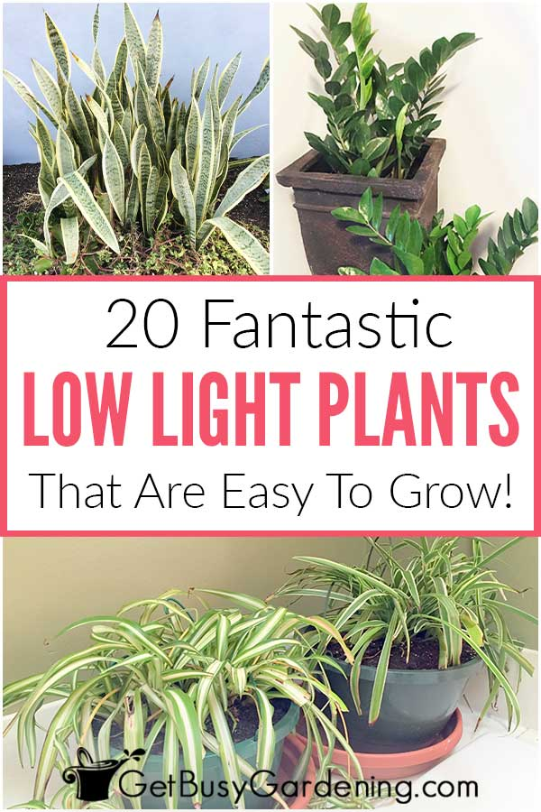 20 Fantastic Low Light Plants That Are Easy To Grow!