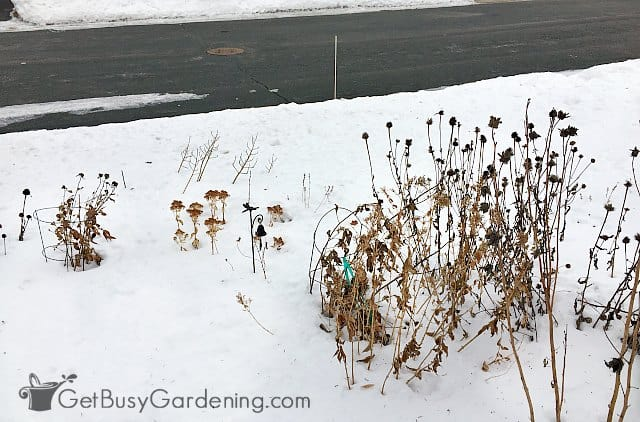 Road salt is bad for your garden