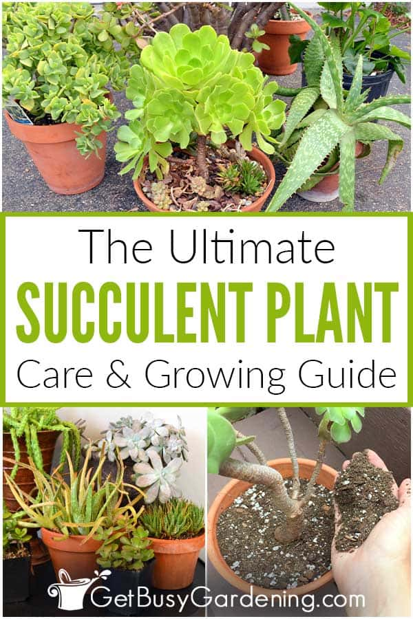 The Ultimate Succulent Plant Care Guide