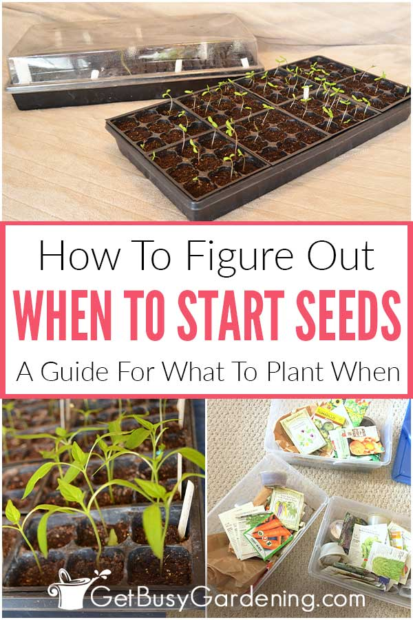 How To Figure Out When To Start Seeds: A Guide For What To Plant When