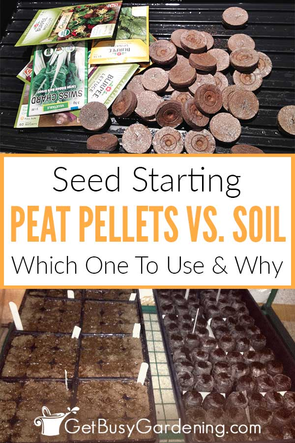 Seed Starting Peat Pellets Vs. Soil: Which Should You Use And Why?