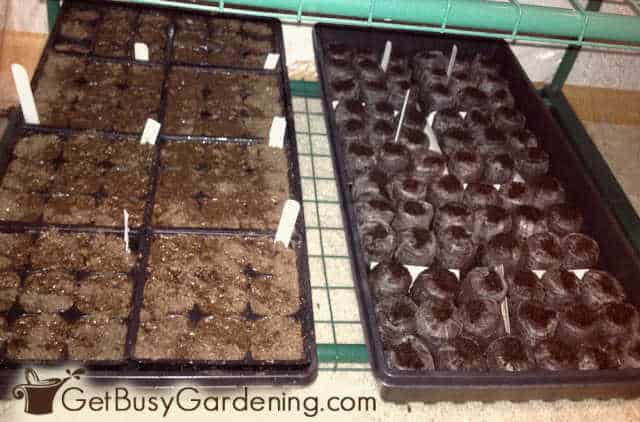 Testing using seed mix and peat pellets