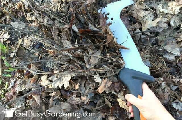 Cut back dead plants in spring