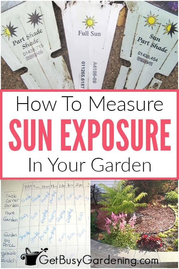 How To Measure Sun Exposure In Your Garden