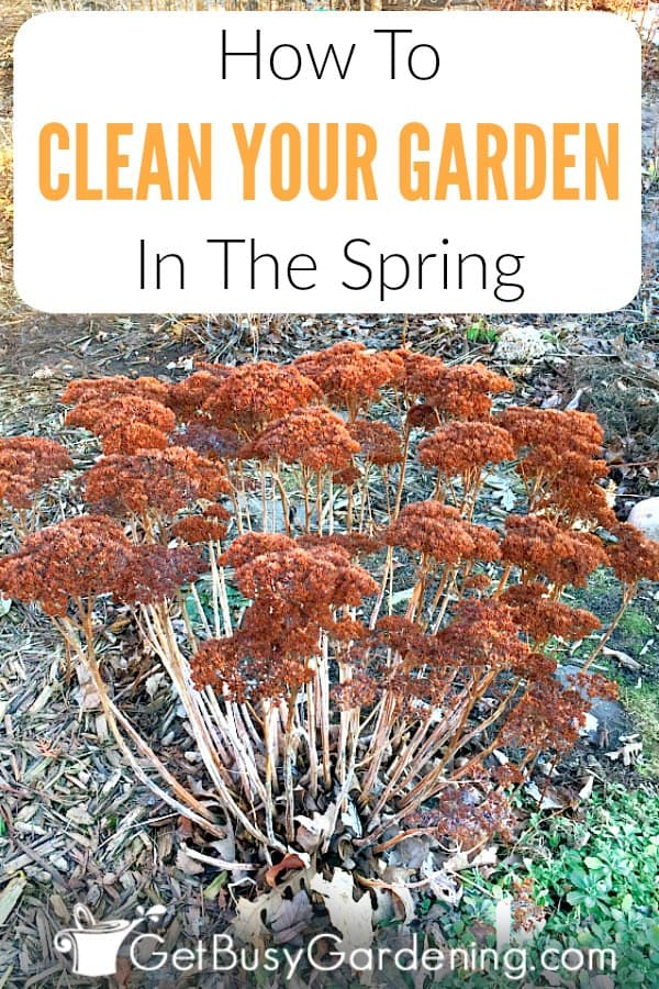 Taking the time for spring yard clean up will make summer maintenance much easier, a clean garden is a healthy garden. But don't start spring cleaning the garden too early, wait until the ground has thawed and dried out a bit. Learn how to clean a garden, with this detailed spring garden clean up checklist. (AD)