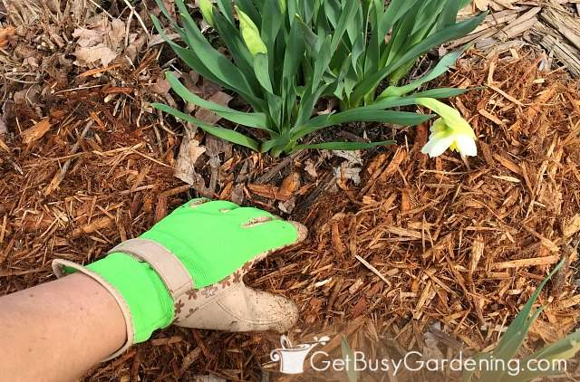 Avoid burying stems when mulching your plants