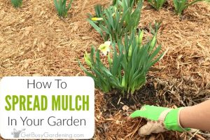 Spreading Mulch Tips: Best & Easiest Way To Lay Mulch Evenly