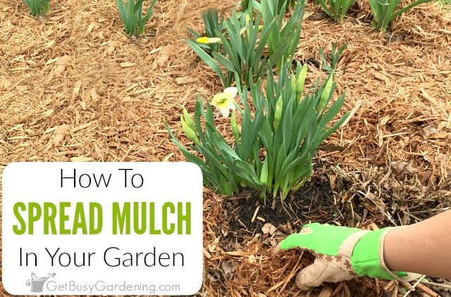 Spreading Mulch In Your Garden