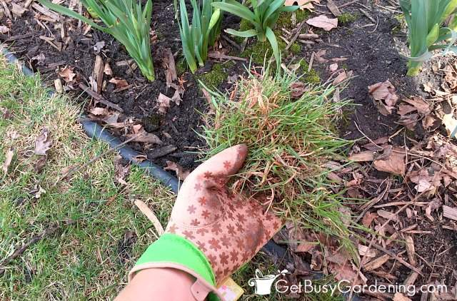 Remove weeds and grass before mulching