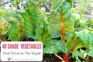 40 Versatile Vegetables That Grow in Shade